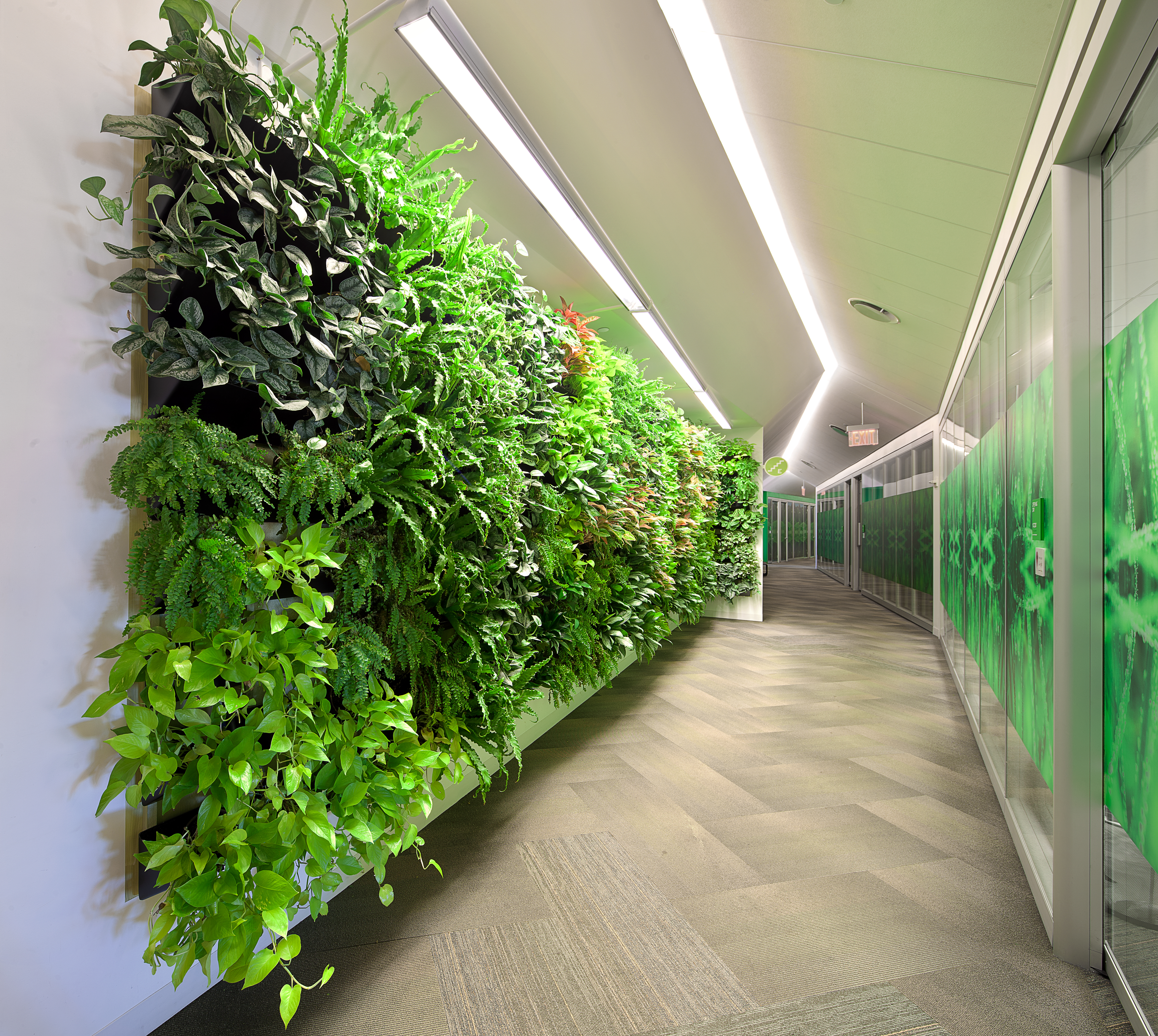 plants for office cubicle. Wall Of Plants Brings Natural Benefits Under Artificial Light For Office Cubicle C