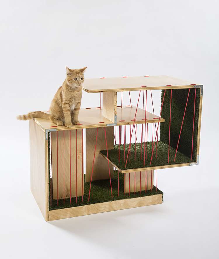 architecture for animals cat shelters