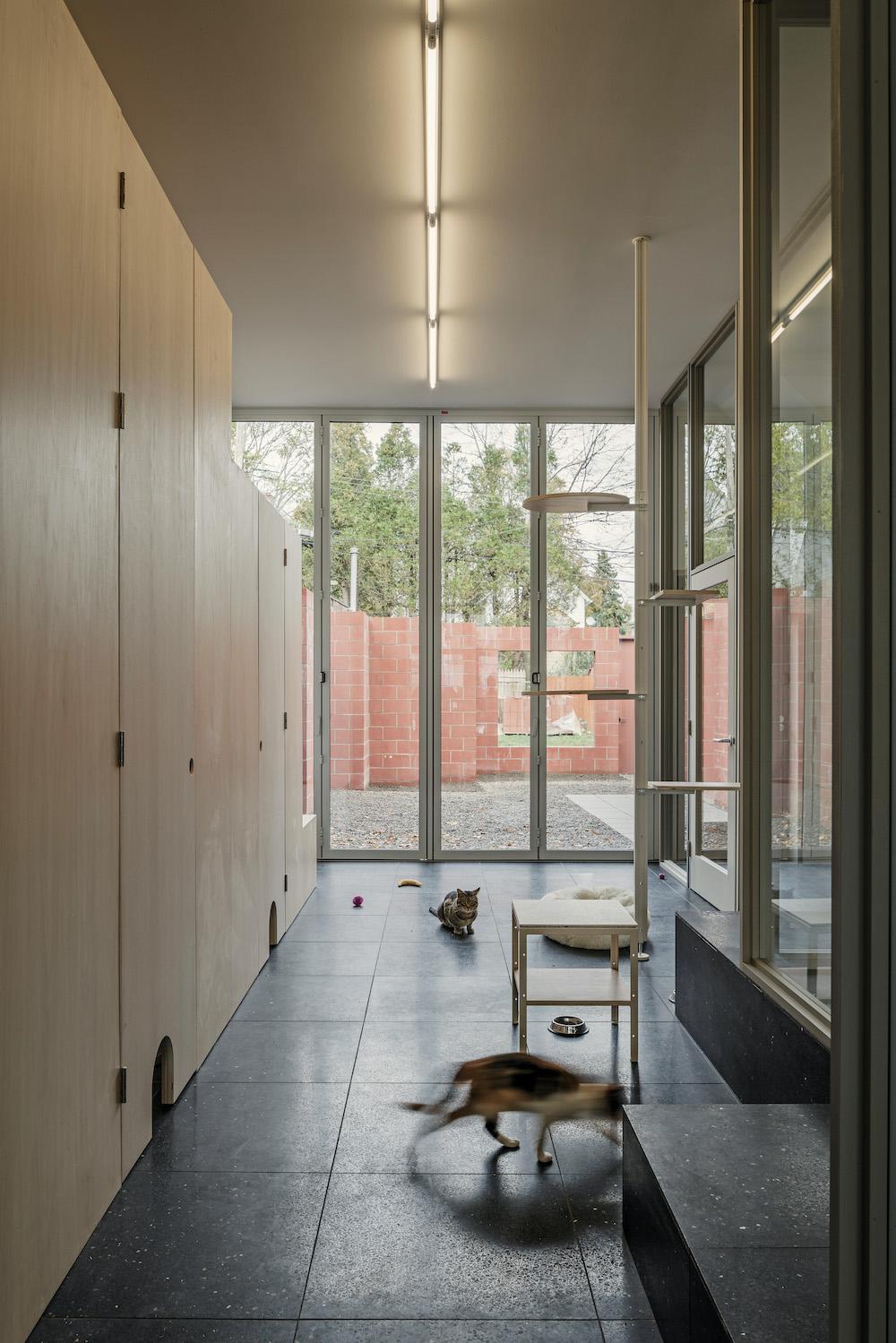 cat cafe interior in buffalo new york